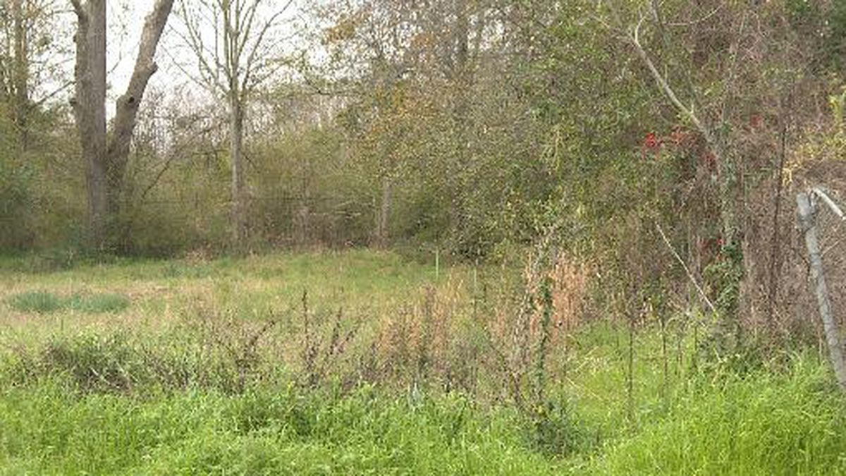 A Dothan lot is up for abatement by the city because the grass and weeds have grown to longer than a foot.