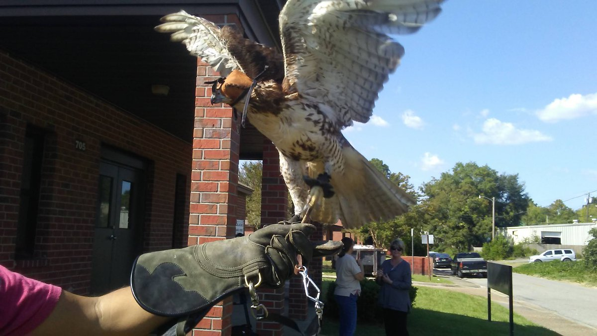 Kids in the McRae Housing Community got to meet David the hawk on Monday afternoon.