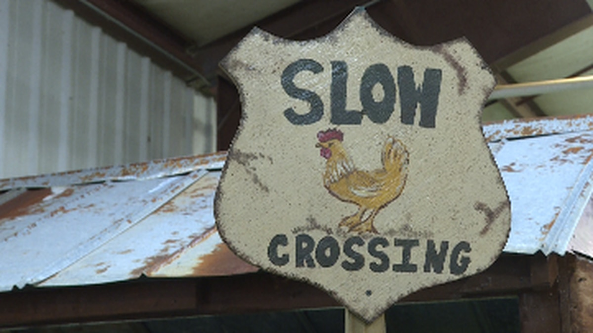 "A decorative sign for NPF 2019's poultry contest theme, ""roadside attraction"" (Source: WTVY)"