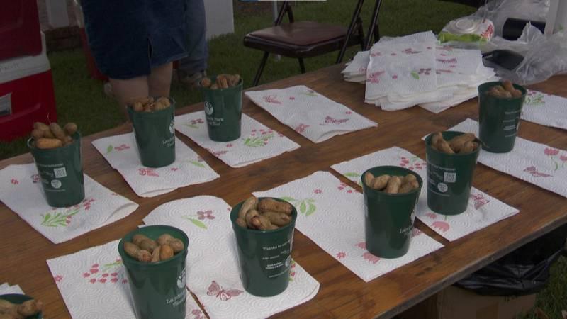 Annual peanut boil at Landmark Park