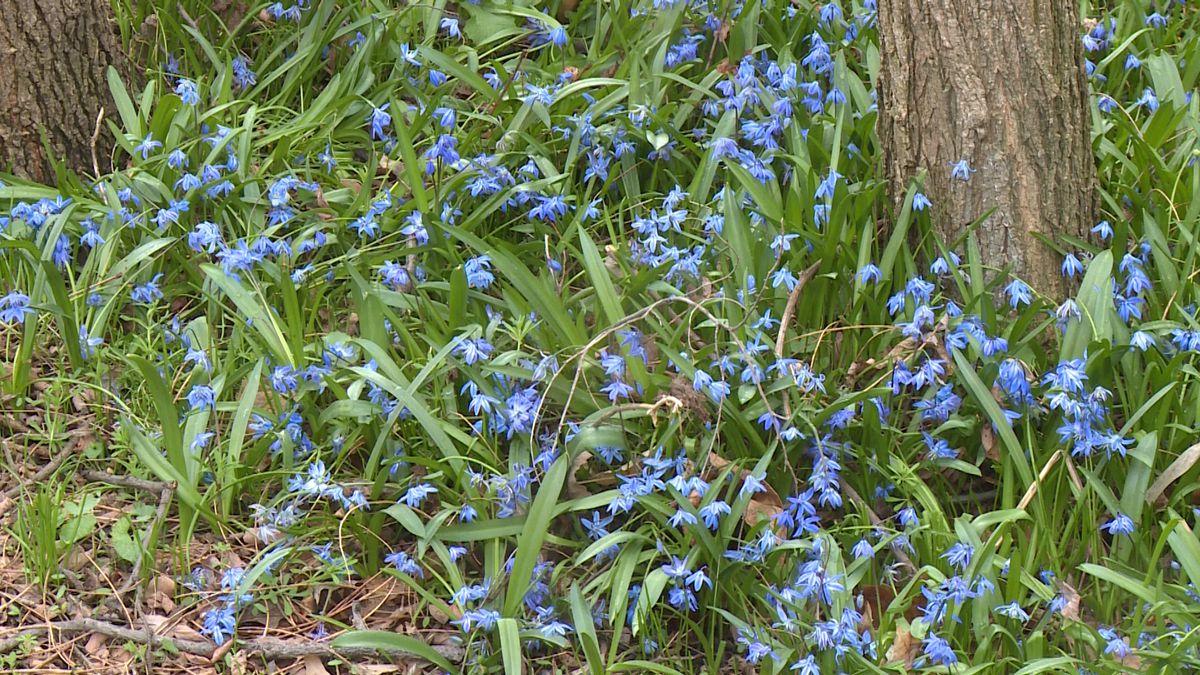 Flowers in Riverside Park.