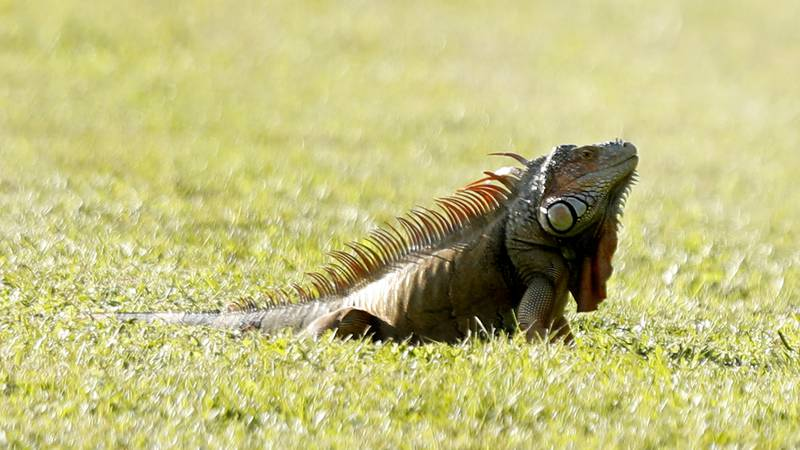 The Florida Fish and Wildlife Conservation Commission will be implementing new high-risk...