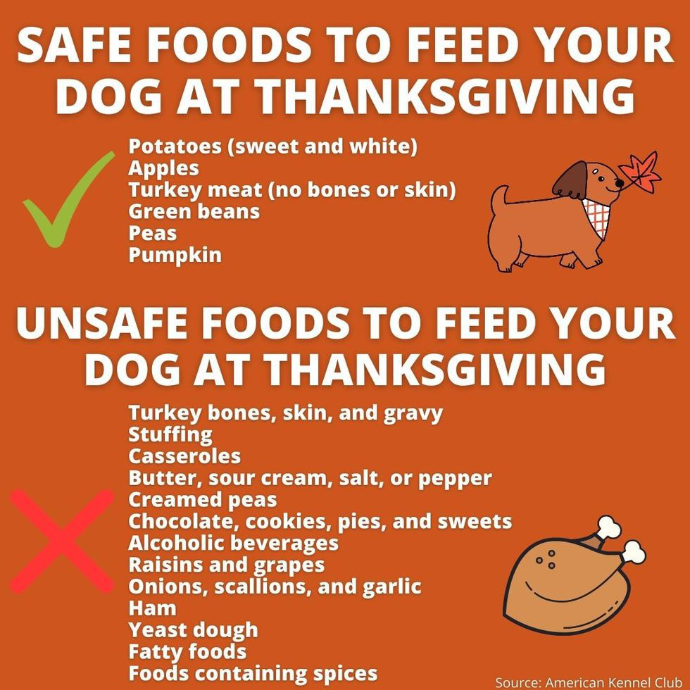 Which holiday dishes are safe and unsafe for pets?