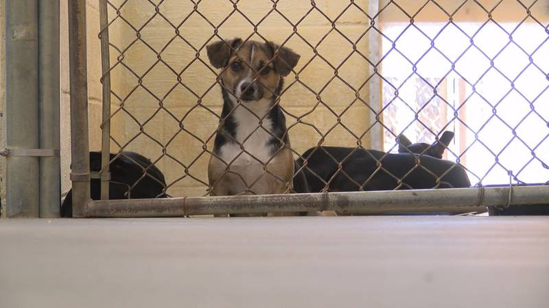 The Humane Society of Elmore County is expecting an influx of animals.