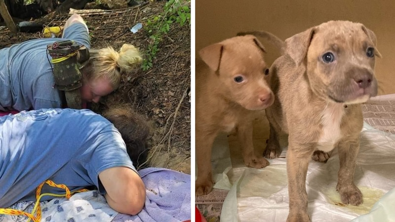 Five puppies were rescued from a 65-foot dry water well near Franklinton, Louisiana.