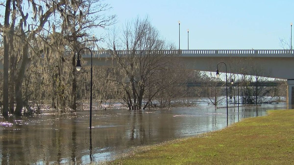 Tree trunks, light poles, and the walkway all submerged in water