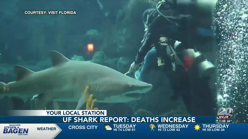 University of Florida releases annual shark attack summary