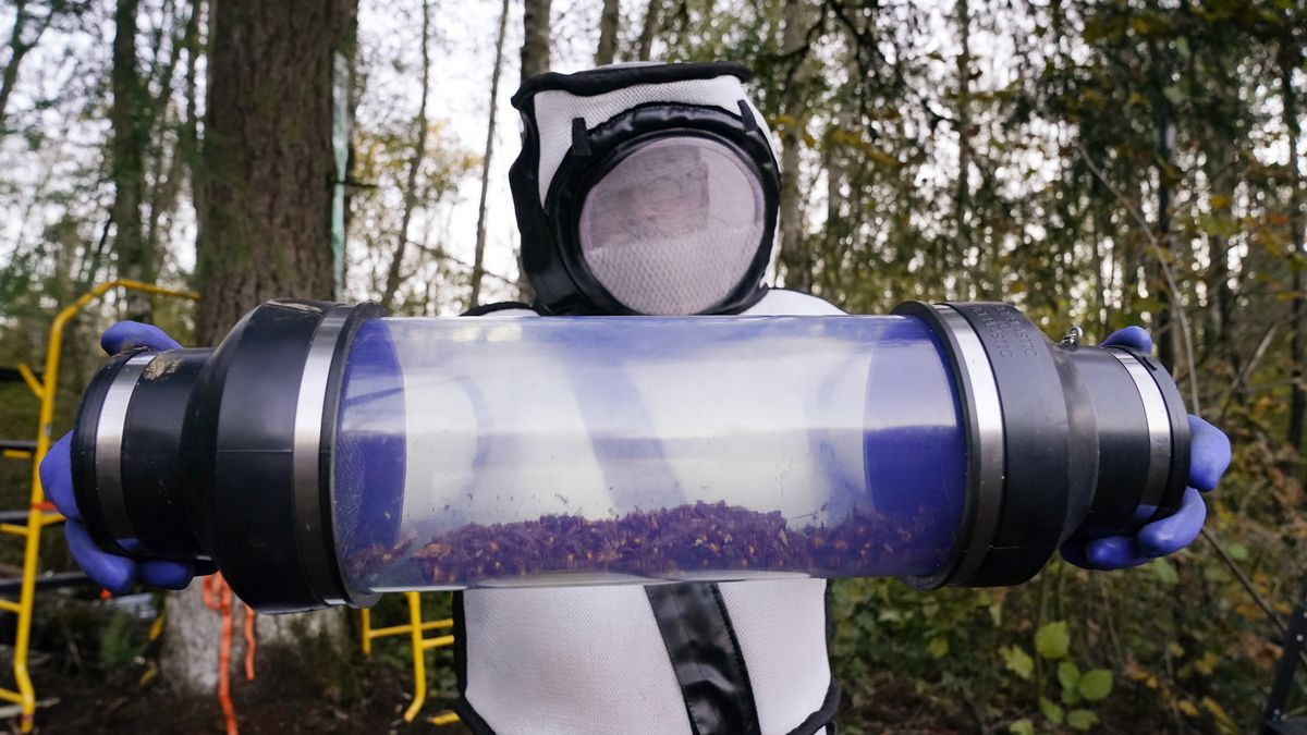 Sven Spichiger, Washington State Department of Agriculture managing entomologist, displays a...