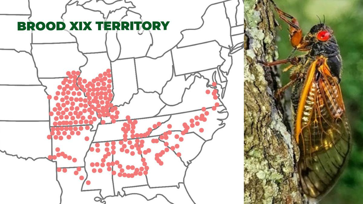 The red dots show areas, including the Augusta region, that are populated by Brood XIX cicadas....