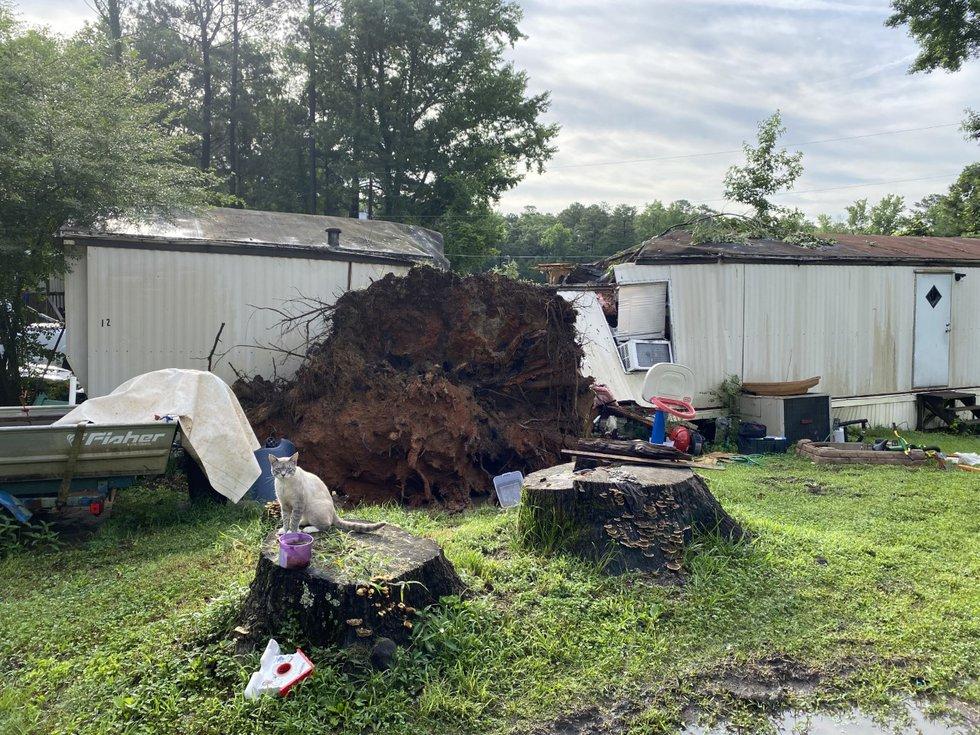 Tuscaloosa, Tree falls on mobile home killing man and child