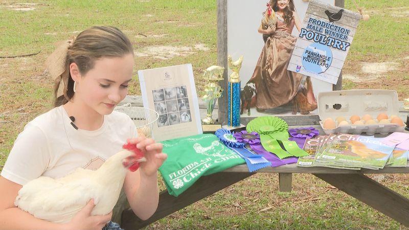 Emma Weeks sells fertilized chicken eggs as a business.
