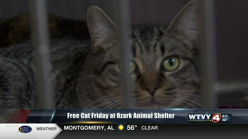 Free Cat Friday