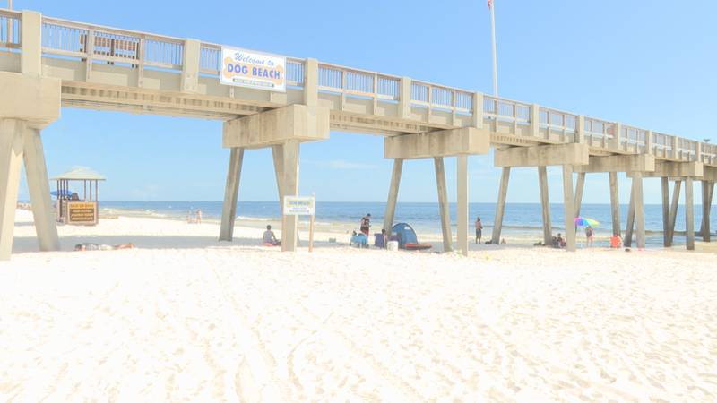 """There are no """"ruff"""" days at one Panama City Beach, unless you step over the line."""